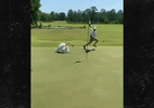 Golfista é atacado por cisne durante partida nos EUA; veja - Reprodução