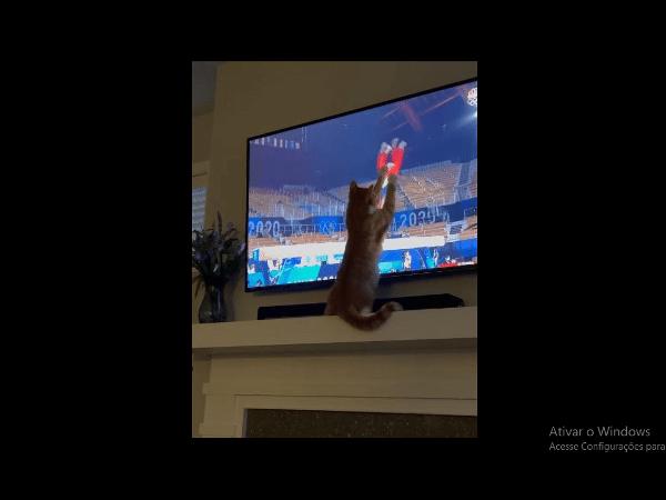 Gato assistindo ginástica viraliza na internet