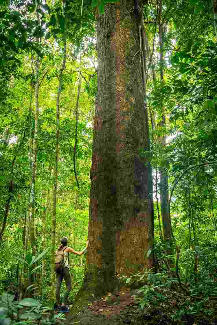 A imensidão do Pequizeiro, durante uma trilha no FLONA, em Santarém, no Pará - Arquivo pessoal - Arquivo pessoal