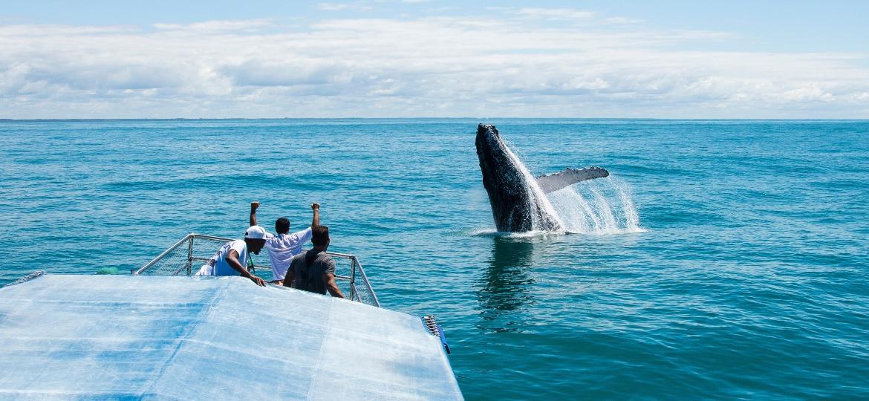 Observação de baleias-jubarte no Brasil - Projeto Baleia Jubarte