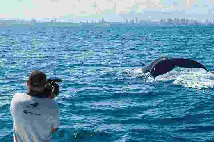 Observação de baleias-jubarte no Brasil  - Projeto Baleia Jubarte - Projeto Baleia Jubarte