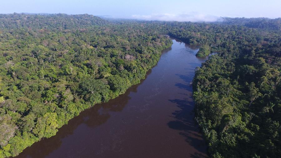 A carta reforça que nenhuma tratativa deve ser considerada pelos EUA antes da redução do desmatamento no Brasil - Divulgação/Expedição Jari-Paru 2019