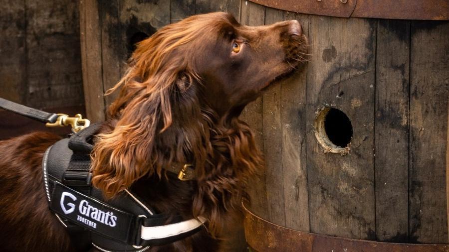 Rocco, o novo funcionário da destilaria escocesa William Grant & Sons - Divulgação
