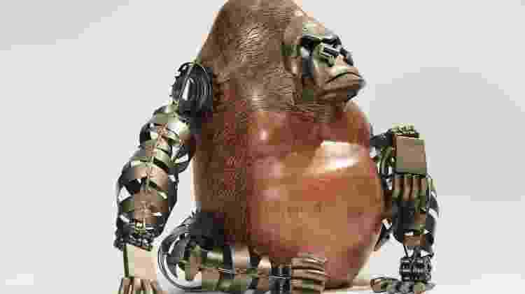 gorila zemar - Divulgação - Divulgação