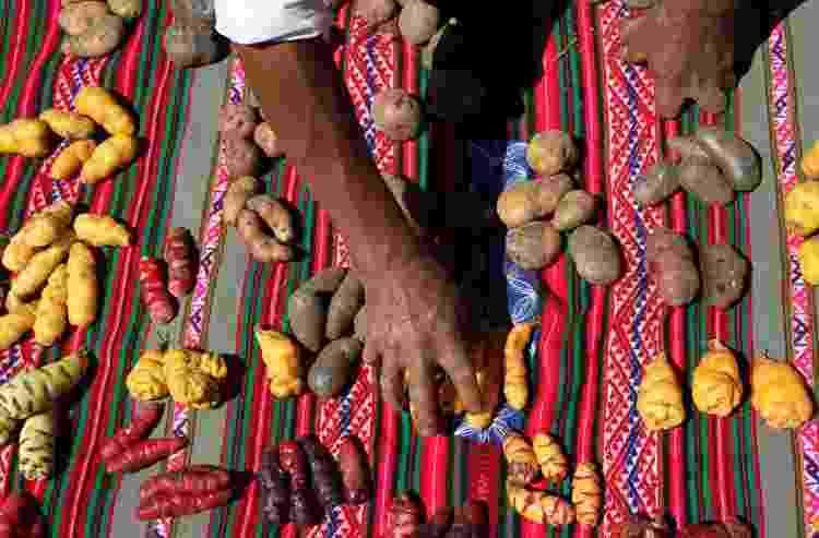Ingredientes usados na Pachamanca, no povoado de Viacha, no Vale Sagrado, no Peru - Eduardo Vessoni - Eduardo Vessoni