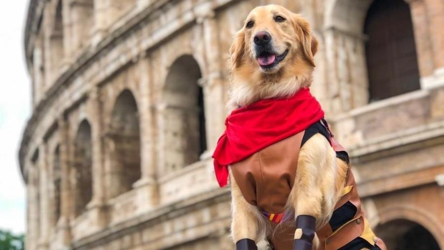 Lilo, a cachorrinha viajante, ao lado do Coliseu, em Roma - Arquivo pessoal