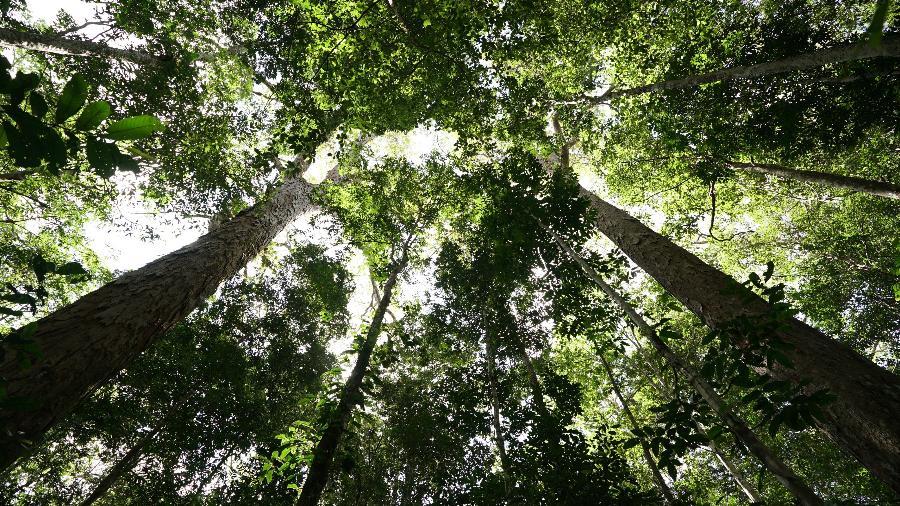 PF cumpre 3 mandados de busca e apreensão; dono de madeireira é suspeito de desmatar uma área de quase 5 mil hectares - Divulgação/Expedição Jari-Paru 2019.