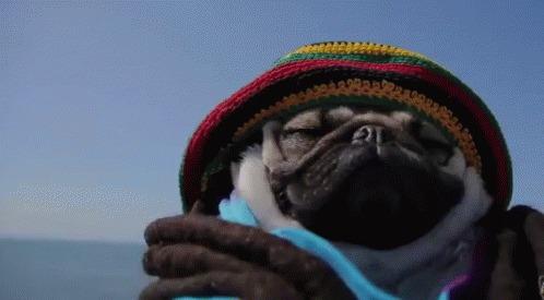 Cachorro reggae