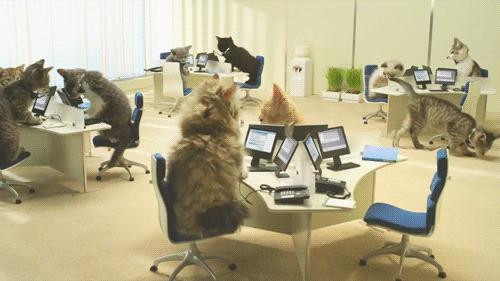 Gatos no escritório