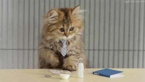 Gato no escritório