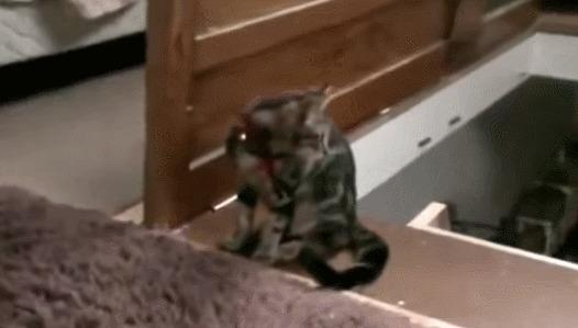 Gato do mal