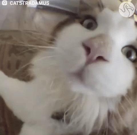 Gato cheirando