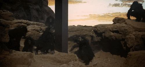 2001 macacos monolito
