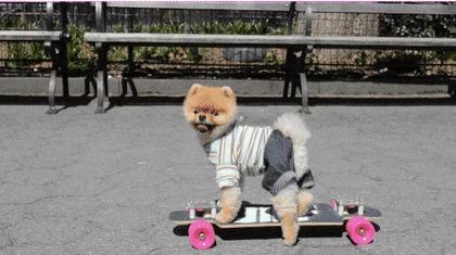 Cachorro no skate