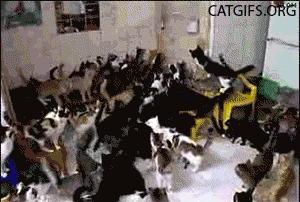 Gatos loucos