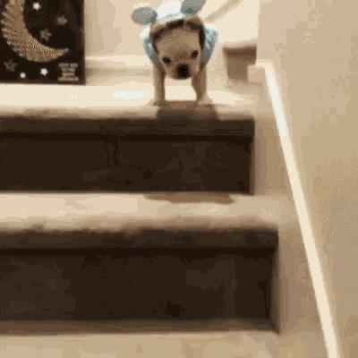 Cachorro caindo da escada