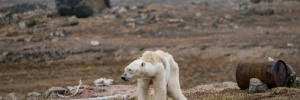 Justin Hofman/Wildlife Photographer of the Year/NHM