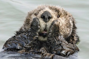 Harry M Walker/Comedy Wildlife Photography Awards