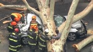 Após temporal | Árvore cai sobre carro em São Paulo e deixa três pessoas presas nas ferragens