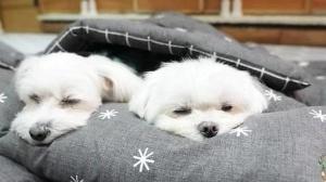 Puppyspring/Bored Panda