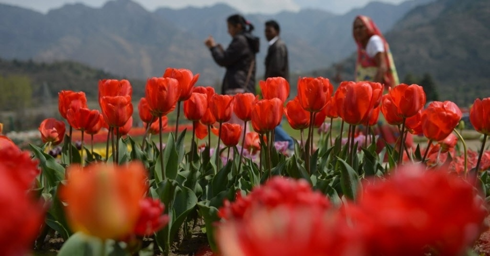 29.mar.2016 - Turistas indianos visitam o jardim de tulipas em Srinagar, na Índia, que contém 1,2 milhão de bulbos da flor distribuídos por 12 hectares. O jardim foi aberto pela primeira vez aos turistas em 2008 e permanece aberto por mais de um mês a cada primavera
