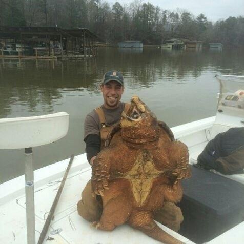31.mar.2016 - Um pescador se surpreendeu ao capturar uma tartaruga-aligator no lago Michigan, nos Estados Unidos. O animal pesa cerca de 100 kg e é a maior espécie de água doce da América do Norte. Wess Prewett publicou a foto com a tartaruga nas redes sociais para mostrar seu tamanho e a imagem fez sucesso na internet
