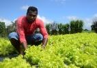 Conheça o gerente que deixou o cargo em SP e foi plantar verdura em AL - Beto Macário/UOL