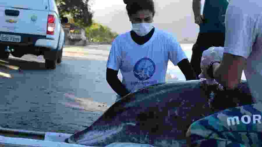 Equipe especializada teve de ser chamada para resgatar golfinho que ficou encalhado em Ubatuba (SP) - Divulgação/ Instituto Argonauta