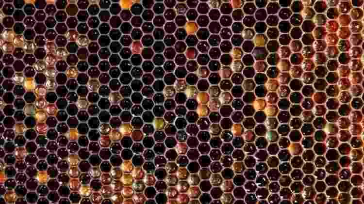 Favos de mel também podem despertar reações desagradáveis - Reuters via BBC - Reuters via BBC