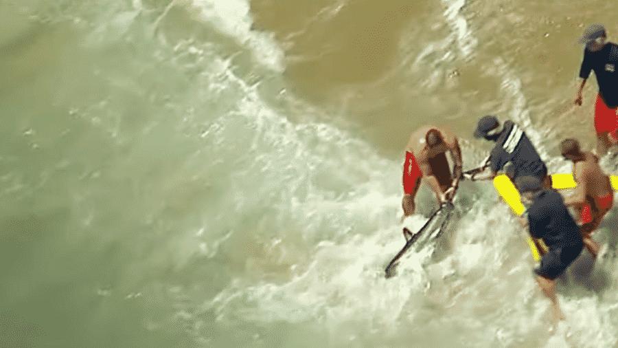 Tubarão é retirado de praia na Califórnia - Reprodução/YouTube