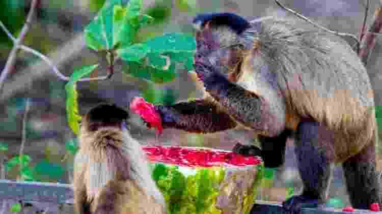 macacos - Chico Ferreira via Fundação Ecotrópica - Chico Ferreira via Fundação Ecotrópica