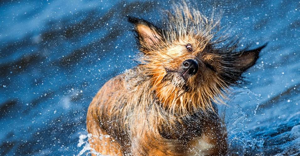 23.set.2016 - Cão de raça indefinida se sacode ao sair da água em Timmendorf, na Alemanha