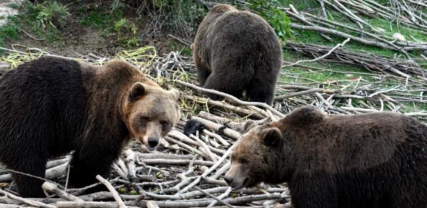 "A ""megafauna"" terrestre inclui carnívoros de ao menos 15 quilos e grandes herbívoros de mais de 100 quilos - AFP"