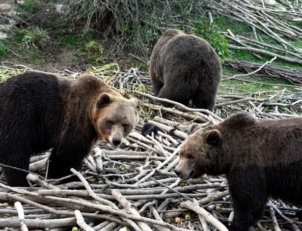 Refúgio abriga ursos órfãos ou feridos, incapazes de sobreviver na natureza
