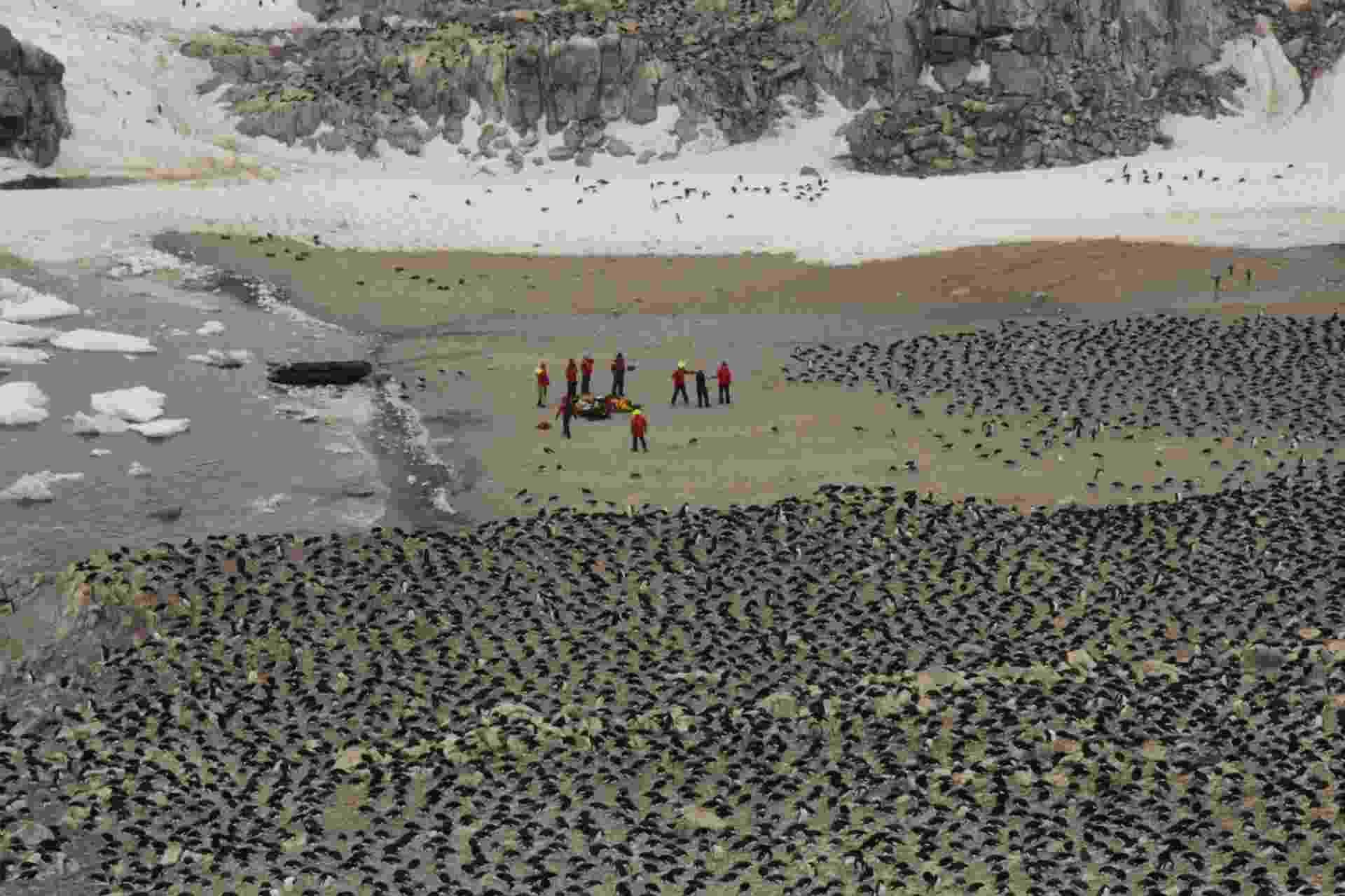 2.mar.2018 - De acordo com o estudo, as Ilhas Danger abrigam 751.527 casais de pinguins-de-Adélia - Louisiana State University/Michael Polito/AFP