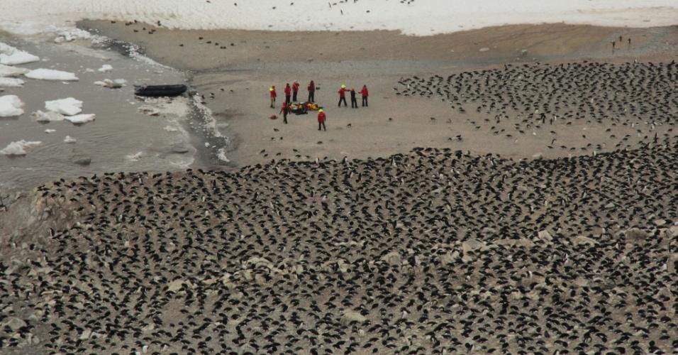 2.mar.2018 - De acordo com o estudo, as Ilhas Danger abrigam 751.527 casais de pinguins-de-Adélia