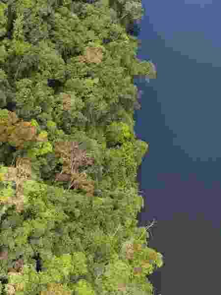 O pedido visa a proteção da Mata Atlântica no estado de São Paulo - Luciano Candisani