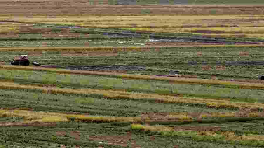 Entidade estima colheita do próximo ano no patamar das 12 milhões de toneladas, um aumento anual de 7,2% - Paulo Whitaker