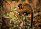 As imagens da luta dos animais pela vida no Pantanal em chamas - Frico Guimarães/Documenta Pantanal
