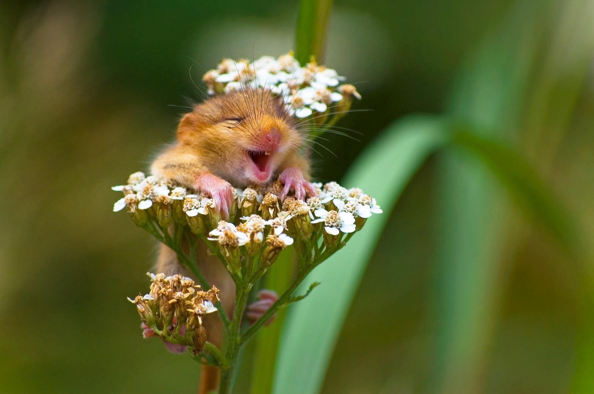 Arganaz contente - A foto vencedadora na categoria especial