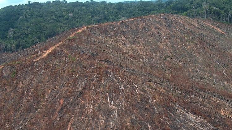 Imagem do Ibama mostra desmatamento em fazenda - Divulgação/Ibama