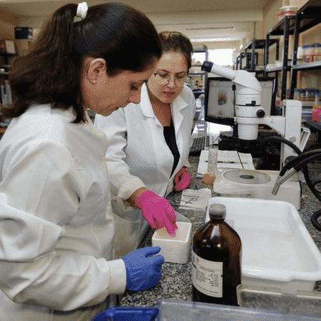 As mulheres inventoras têm maior presença nos campos de assistência médica e farmacêutica - Camila Guimarães