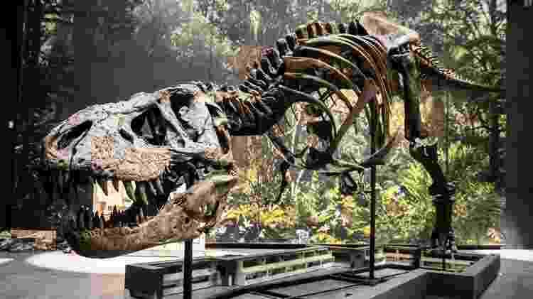 O tiranossauro parece ter estruturas similares às de jacarés em seu crânio - EPA