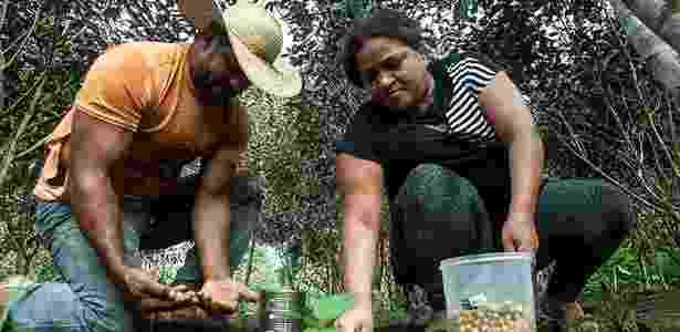 Os assentados Osvalinda e Daniel Pereira cultivam a roça dentro do assentamento; lote do casal é um dos mais preservados do local - Lilo Clareto/Repórter Brasil