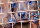 Relator dá aval para aumentar pena por maus-tratos contra cães e gatos - Getty Images
