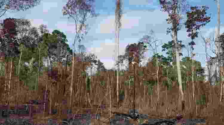 Floresta afetada pela seca e fogos na região de Santarém durante o El Niño em 2015 - Erika Berenguer/Divulgação - Erika Berenguer/Divulgação