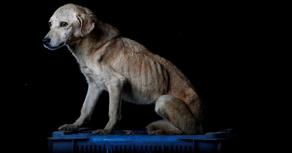 """MIA - Há um ano, Mia foi deixada na porta do abrigo. """"Ela havia sido adotada por uma família, mas eles depois a devolveram, dizendo que ela não havia se adaptado à vida em um apartamento"""", diz Maria Silva, que cuida dos cachorros no abrigo Famproa, em Los Teques, na Venezuela"""