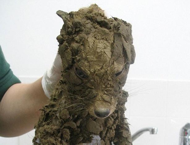 Era tanta lama que nem os veterinários souberam dizer de que bicho se tratava