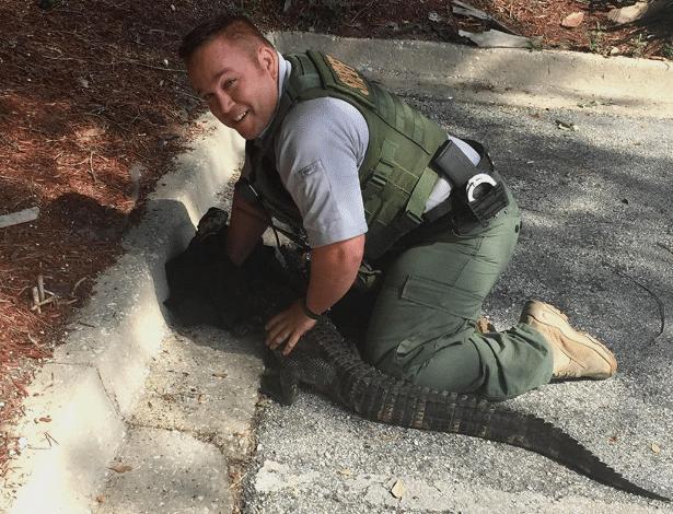 Policial imobiliza jacaré no condado de St. Johns, na Flórida (EUA)