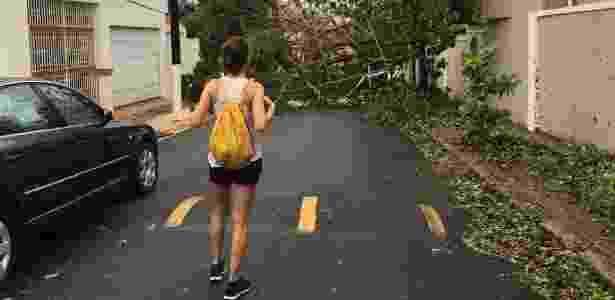 A brasileira Barbara Resende observa árvore caída em rua de San Juan, no Porto Rico - Reprodução/Facebook Edipo Cravo - Reprodução/Facebook Edipo Cravo